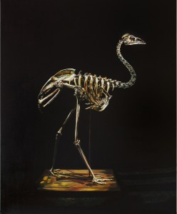 Emma Lindsay 2013, Dwarf kangaroo island emu (extinct), Oil on linen, 121 (w) x 149 (h). Photo: Elouise