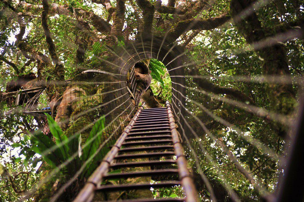 Lamington-National-Park-tree-top-walk-Queensland-Australia-Source-Wikipedia